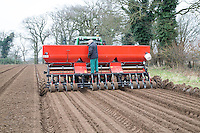 Planting onion sets - Norfolk, February
