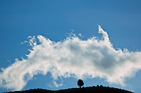 Silhouette of single tree with cloud