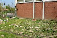 Schulgarten, Fläche am Schulgebäude, auf der ein Schmetterlingsgarten angelegt werden soll, Garten der Grundschule Nusse wird als Projektarbeit von einer 1. Klasse gestaltet, Gartenarbeit