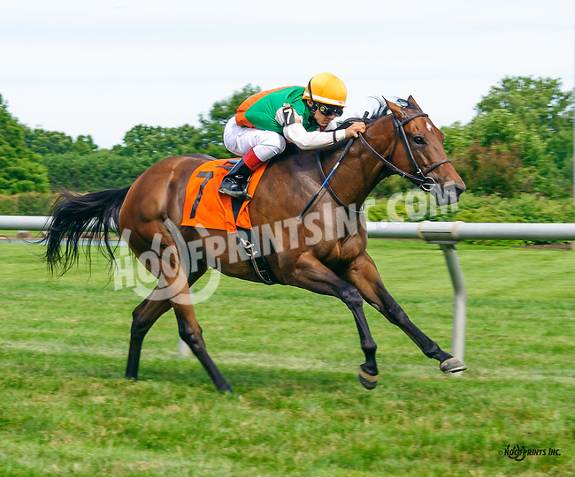 Sanctifiza winning at Delaware Park on 7/2/16