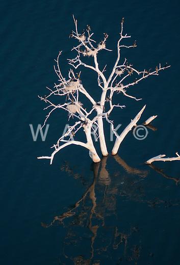 Dead tree in Lake Pueblo.  Bird habitat.  June 2012.