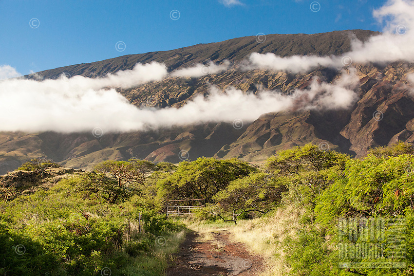 A view of a cloud-kissed mountain range, seen from a dirt road near Hwy. 31/Pi'ilani Hwy., on the south shore of Maui.
