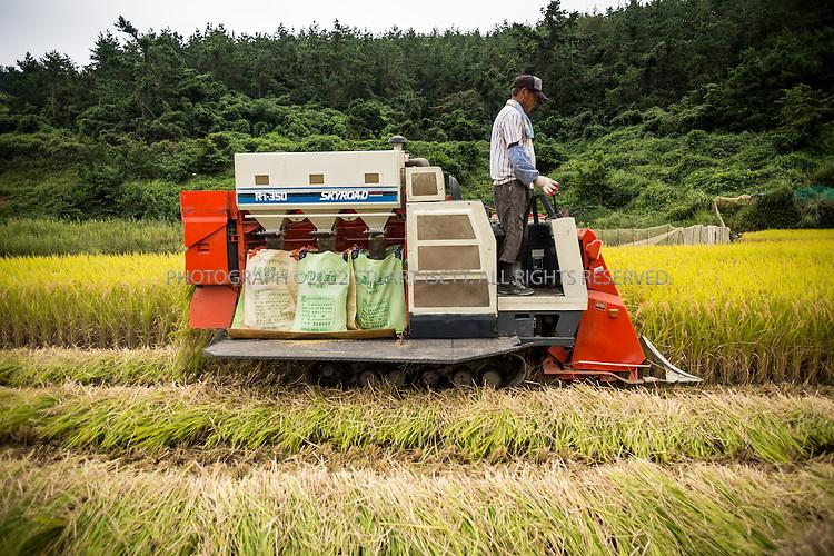 9/11/13 -- Cheongsando Island, Jeonnam Province (Jeollanam-do), South Korea<br /> <br /> A farmer harvests his rice fields on Cheongsando Island.<br /> <br /> Photograph by Stuart Isett<br /> &copy;2013 Stuart Isett. All rights reserved.