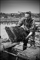 France, Ille-et-Vilaine (35), Cancale,Franck Vallerie ostréiculteur: Les Huîtres de Céline // France, Ille et Vilaine, Cancale, Oyster farmer: Franck Vallerie, Oyster farm: Les Huîtres de Céline: Cancale oysters, local oysters [Non destiné à un usage publicitaire - Not intended for an advertising use]