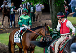 July 11, 2020: Dunbar Road #2, ridden by Irad Ortiz, Jr., walks in the paddock before the Delaware Handicap on Delaware Handicap Day at Delaware Park in New Stanton, Delaware. Scott Serio/Eclipse Sportswire/CSM