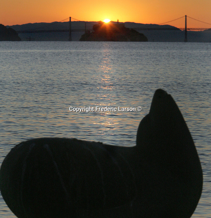 A morning swimmer does laps off the shores of Sausalito during sunrise..
