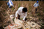 In the countryside of the Guatemalan city, Esquintla, many families lost almost two years of maize crops due to extreme rainstorms and drought, and with the 40 percent rise in the cost of corn, most cannot afford to buy enough to feed their families. Wednesday, July 28, 2011.
