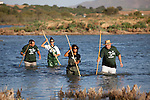 Volunteers wading to the shore after taking part in the annual leg ringing  of Juvenile Flamingos at Fuente De Piedra in Andalucia, Spain.