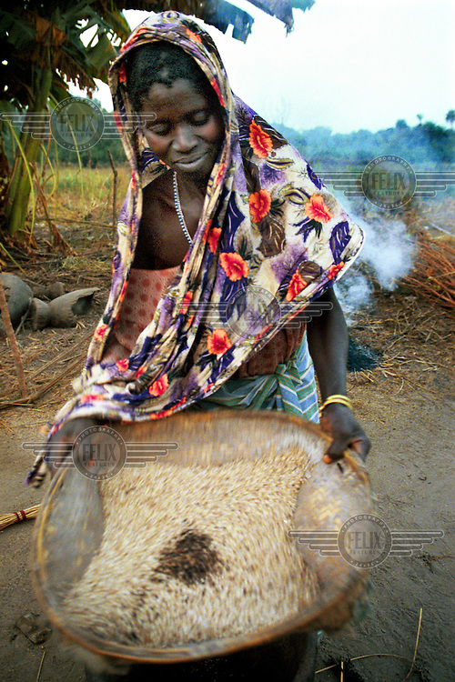 © Ami Vitale / Panos Pictures.Guinea Bissau..Uma balde prepares the rice for dinner in the West African country of Guinea Bissau. The women in this culture do all of the labor intensive agricultural work as well as the household chores.   Guinea Bissau is ranked as one of the poorest nations in the world and has just emerged from a civil war but still village life has remained unchanged.  (Photo by Ami Vitale)
