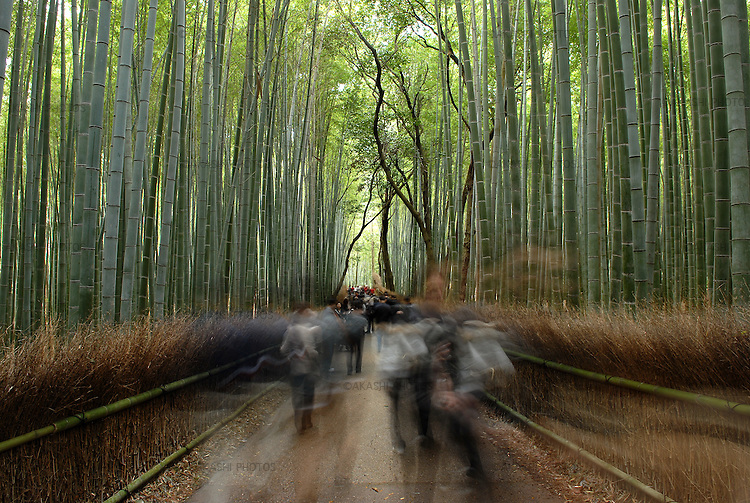Bamboo forest in Arashiyama district in Kyoto.<br /> <br /> Forêt de bambous dans le district d'Arashiyama à Kyoto.
