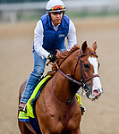LOUISVILLE, KENTUCKY - APRIL 30: Improbable, trained by Bob Baffert, exercises in preparation for the Kentucky Derby at Churchill Downs in Louisville, Kentucky on April 30, 2019. John Voorhees/Eclipse Sportswire/CSM
