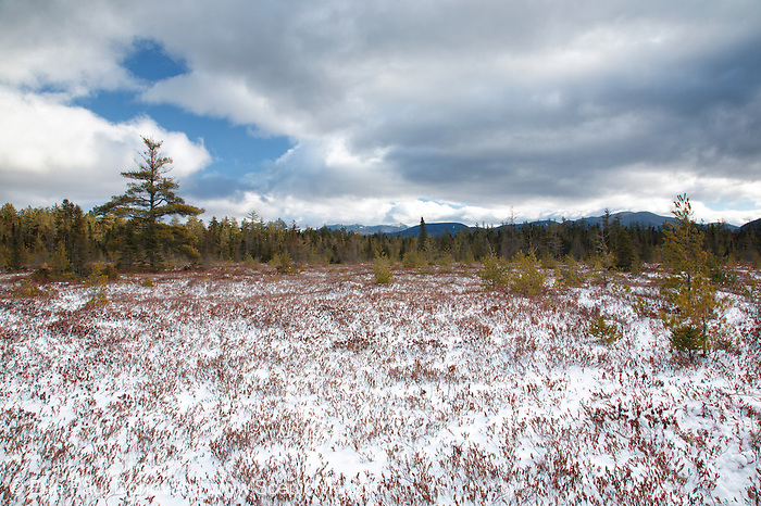 "Peatland community near Church Pond in the White Mountains, New Hampshire USA. This area is referred to as ""the bog"" and was part of the Swift River Railroad era, which was a logging railroad in operation from 1906-1916. Mount Chocorua is way off in the distance."