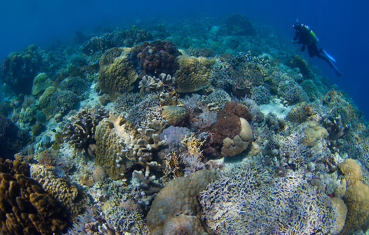 Reef top seascape in Bunaken National Park, Sulawesi, Indonesia