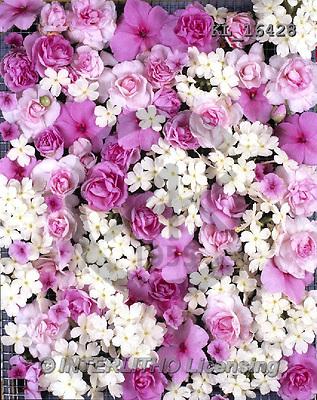 Interlitho, FLOWERS, BLUMEN, FLORES, photos+++++,white+pink flowers,KL16428,#f#