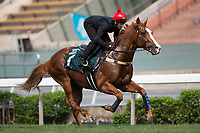 SHA TIN,HONG KONG-APRIL 28: The United States,trained by ,prepares for  the Audemars Piguet QEII Cup at Sha Tin Racecourse on April 28,2017 in Sha Tin,New Territories,Hong Kong (Photo by Kaz Ishida/Eclipse Sportswire/Getty Images)