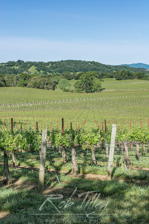 USA, CA, Sonoma County, Alexander Valley, Spring Vineyard