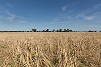 Barley Stubble field <br /> Picture Tim Scrivener 07850 303986<br /> &hellip;.covering agriculture in the UK&hellip;.