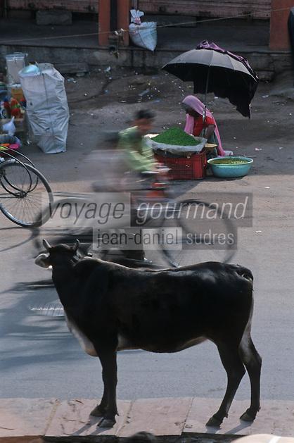 Asie/Inde/Rajasthan/Jaipur: vache sacrée et trafic sur Choti Chaupar