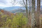The Deep Creek Valley, Great Smoky Mountains National Park, North Carolina, USA