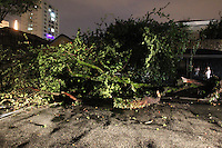 FOTO EMBARGADA PARA VEICULOS INTERNACIONAIS. SAO PAULO, SP, 24-12-2012, CHUVA. A forte chuva que caiu em Sao Pauilo na tarde dessa Segunda Feira (24) deixou varios pontos de alagamento, uma arvore de grande porte caiu na Rua dos Campineiros alt do numero 530 . Luiz Guarnieri/ Brazil Photo Press.