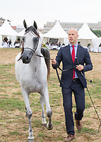 White Arabian Horse with dark mane, Rejawi Lembarak, in the show ring with handler, at International Arabian Horse Show 2017 in Prague The Czech Republic