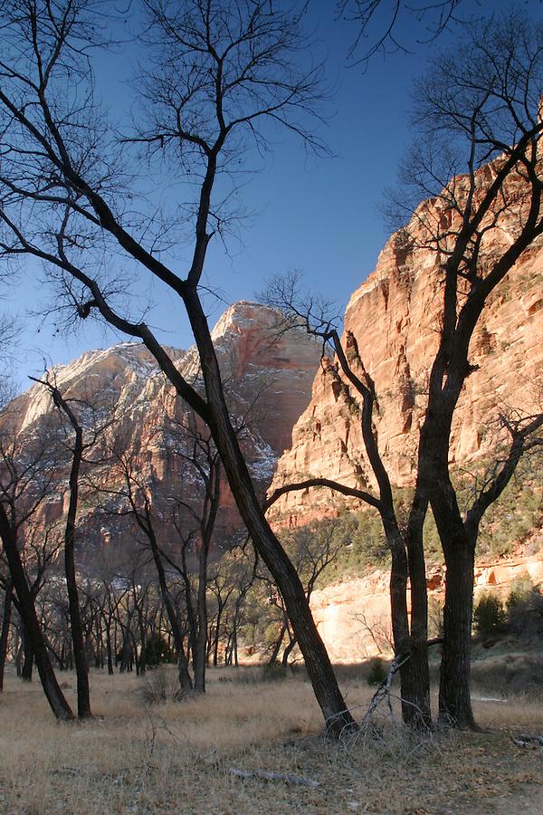 Canyon walls rising above cottonwood trees, Zion National Park, Washington County, UT