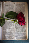 Sheryl Bostic's Bible, with a dried rose from her mother's funeral.