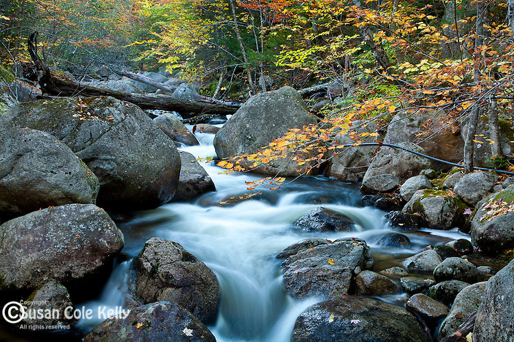 Autumn on Abol Stream in Baxter State Park, Piscataquis County, ME, USA