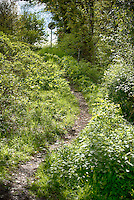 Footpath in spring, Chipping, Lancashire.