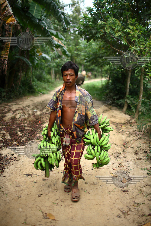A Garo man carries hands of bananas. The Garo (or Mandi, as they refer to themselves) are an ethnic minority thought to be of Tibeto-Burmese origin. Prior to British rule they were mostly anamists but missionary work led the majority to convert to Christianity. The Garo of the Madhupur forest have long been under the threat of eviction by the government and the forest that they gain much of their livelihood from is being rapidly destroyed by unregulated logging.
