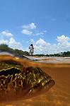 PEACOCK BASS ON THE AGUA BOA IN BRAZIL
