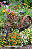 63821-22207 Old bicycle with flower basket in garden with zinnias,  Marion Co., IL