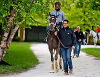 BALTIMORE, MD - MAY 12: Kentucky Derby winner Always Dreaming heads back from the track after exercising in preparation for the Preakness Stakes next week at Pimlico Race Course on May 12, 2017 in Baltimore, Maryland.(Photo by Scott Serio/Eclipse Sportswire/Getty Images)