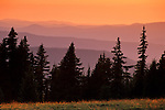 Sunset and evergreen trees from Crater Lake National Park, Oregon