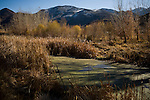 A riparian habitat along the Truckee River through the McCarran Ranch, where the Truckee River was restored to its original course in 2006.