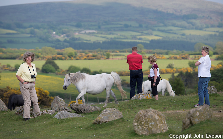 German tourists and Dartmoor ponies, Dartmoor, Devon.