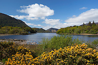 Ireland, County Kerry, near Killarney, Killarney National Park, Muckross Estate, view over Muckross Lake   Irland, County Kerry, bei Killarney, Killarney National Park, Muckross Estate, Blick ueber den Muckross Lake