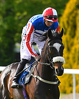 Hallingham ridden by Hector Crouch goes down to the start of The Smith & Williamson Handicap (Class 6)     during Afternoon Racing at Salisbury Racecourse on 17th May 2018