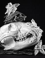 black bear skull, turtle, dead daffodils still live