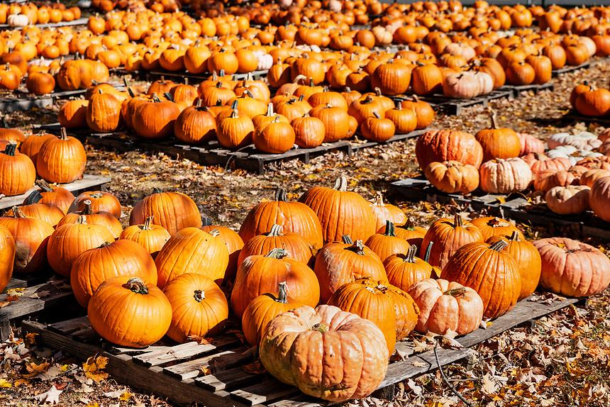 Autumn pumkin sale.
