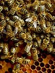 Fully, le 24 ao&ucirc;t 2017, l' apicultrice valaisanne, Huguette Carron, dans ses ruchers<br /> &copy; sedrik nemeth