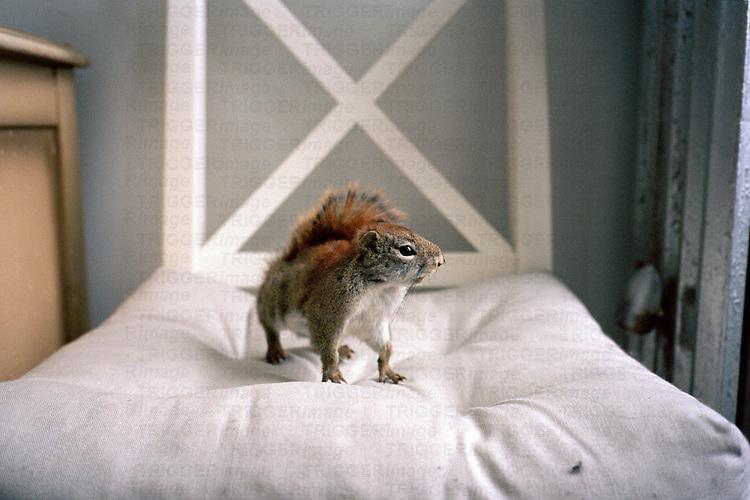 a squirrel on a chair