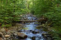Creek in Lower Whiteaoak Canyon