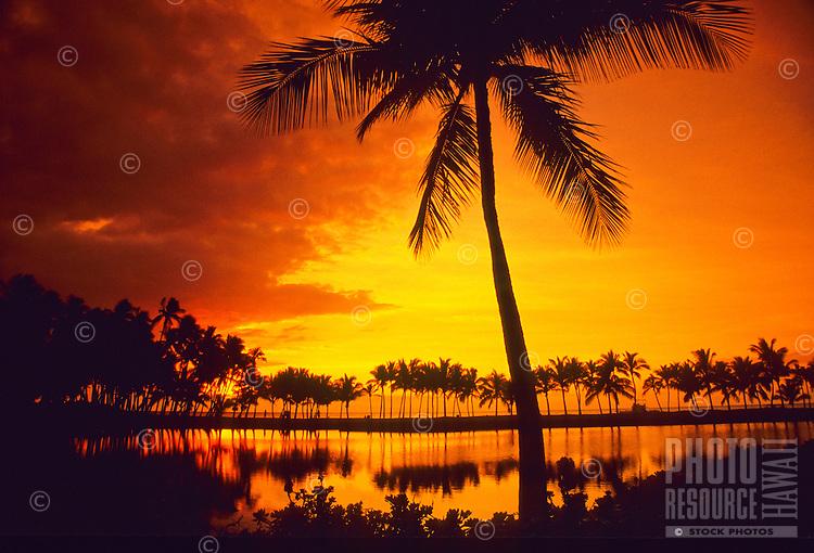 Palm trees fringe the once-royal Hawaiian fishpond at Anaehoomalu Bay at sunset on the Big Island of Hawaii