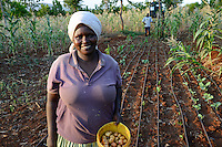 KENYA, ADS Anglican Development Services of Mount Kenya East, Region South Ngariama , project water ponds and drip irrigation during drought periods / KENIA, Projekt Wasserspeicherbecken zur Nutzung in Duerreperioden, Farmer Timothy Muriuki Karaye und Frau Jane Nyambura betreiben mit dem Wasser eine Troepfchenbewaesserung - NUR FÜR REDAKTIONELLE NUTZUNG, kein PR !