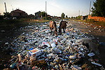 Horses seek out food in a heap of garbage surrounding a Roma village in Northwest Bulgaria in September 2008.