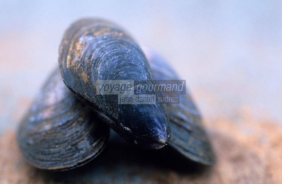 Europe/France/Picardie/80/Somme/Le Crotoy : Moules de Bouchot nettoyées de la baie de  Somme