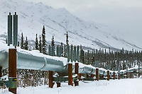 Trans Alaska oil pipeline north of the Brooks Range, Arctic, Alaska