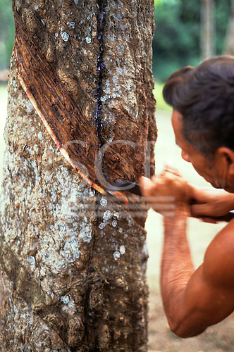 Belterra, Para State, Brazil. Rubber tapper tapping a tree.