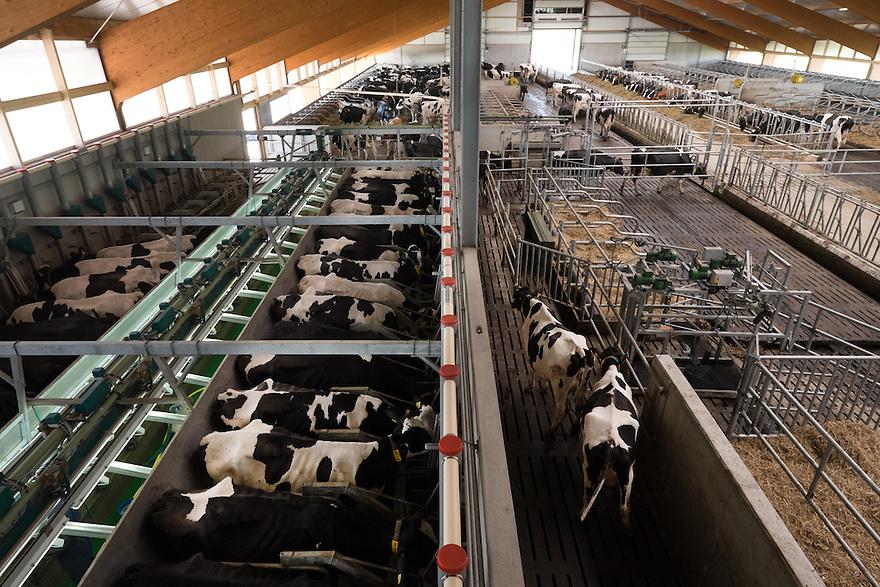 Nederland, Zwartsluis, 2 mei 2015<br /> Natuurboerderij Weidevol. Biologisch melkveebedrijf. <br /> Nieuwe moderne melkstal links, rechts de stal voor in de winter en in de nacht<br /> <br /> Foto: Michiel Wijnbergh